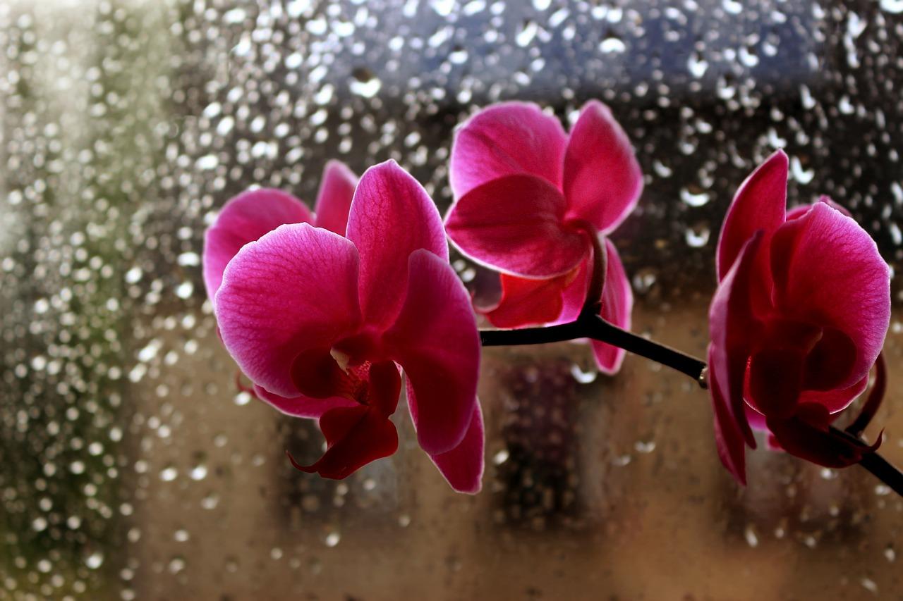 flowers-2434588_1280